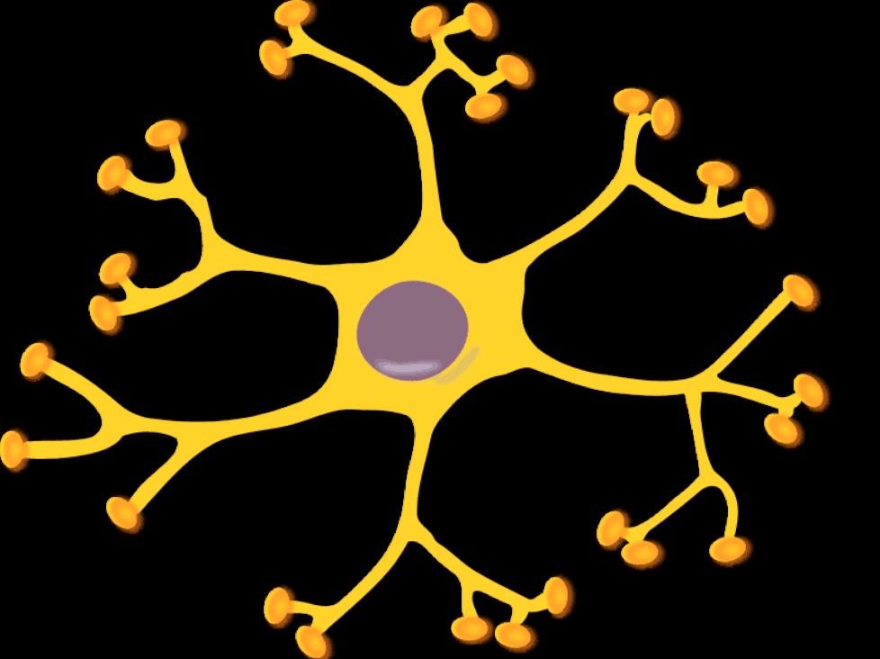 keikannui-neuron-interneuron-2-800px